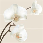 Dec. Orquidea (COMP.3PZS) C-5, 25x75