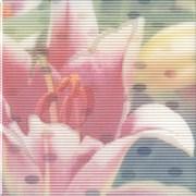 NT/A97/5155 Декор Весеннее шоу Лилия 20х20х6,9