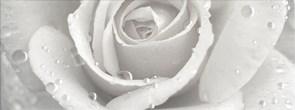 STG/A289/15000 Декор Уайтхолл Роза 15х40х8